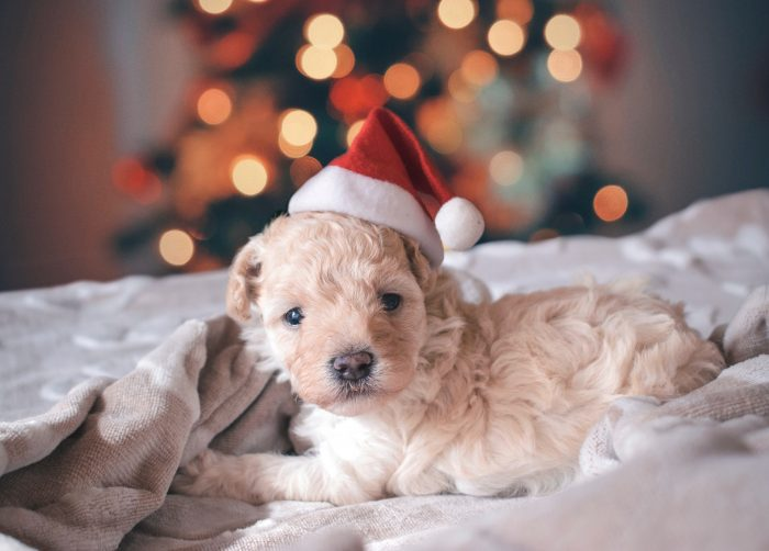 Marketers should get ready now for the year-end holidays. Photo by Rhaúl V. Alva on Unsplash